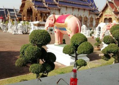 Chiang Mai 2019
